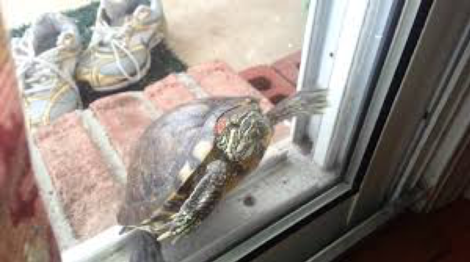 Turtle Check In